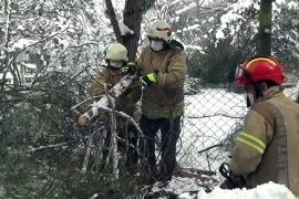 Devrilen ağaç 4 araca zarar verdi