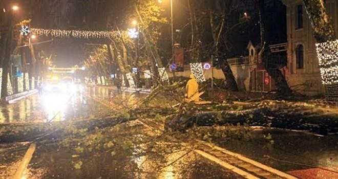 Fırtına nedeniyle tehlike saçan ağaç kesildi