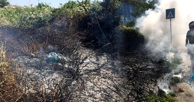 Beşiktaş'ta otluk alanda yangın paniği