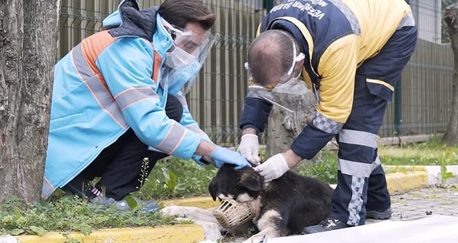 Muhtaç sokak hayvanlarının yardımına koşuyorlar