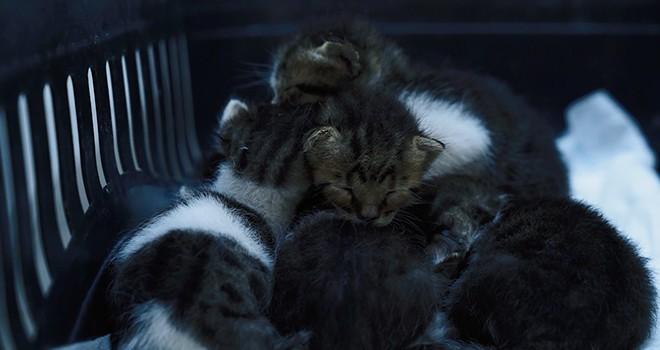 Anneleri ölen yavru kedilere belediye sahip çıktı