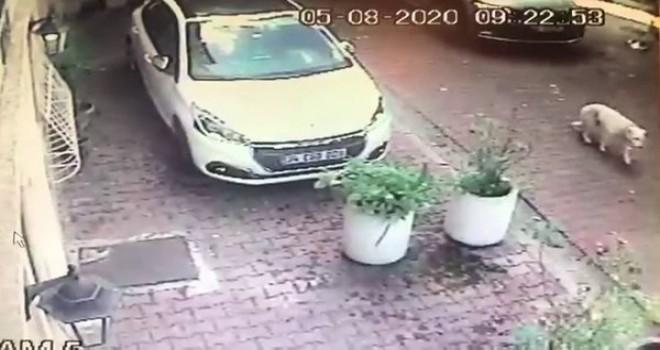 Kadın sürücü köpeğe çarptı ve kaçtı