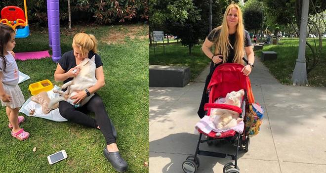 Ünlü komedyen felçli köpeğini bebek arabasında gezdirdi