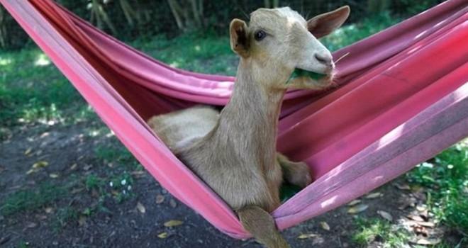 Fotoğraflarla evcil hayvanların komik anları