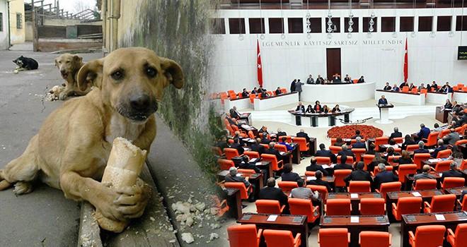 Hayvan Hakları Yasası yılbaşından sonra Meclis'te