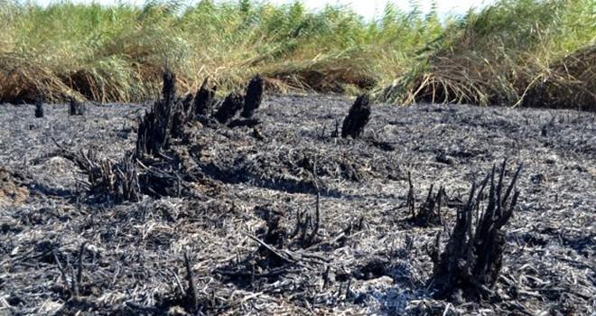 Türkiye'ye düşen meteor 50 dönüm alana hasar verdi