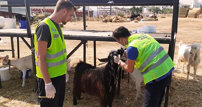 Veteriner hekimler yangınlardan kurtarılan hayvanlar için görev başında