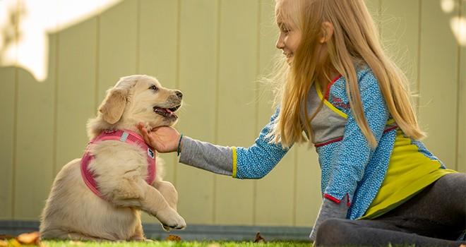 Köpeğiniz için doğru tasmayı nasıl seçebilirsiniz?