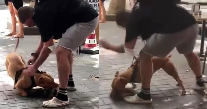 Beşiktaş'ta pitbull dehşeti! Kediye saldırdı