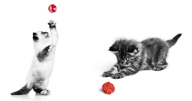 Pandemi döneminin gizli kahramanları kediler
