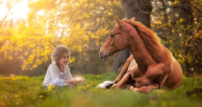 Atlar insani duyguları okuyabiliyor
