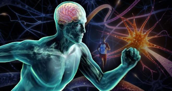 Egzersizin öğrenme yetisini geliştirdiği ortaya çıktı