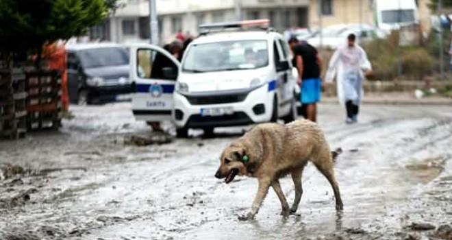 İstanbul Valiliği açıkladı! işte yağmurda meydana gelenler