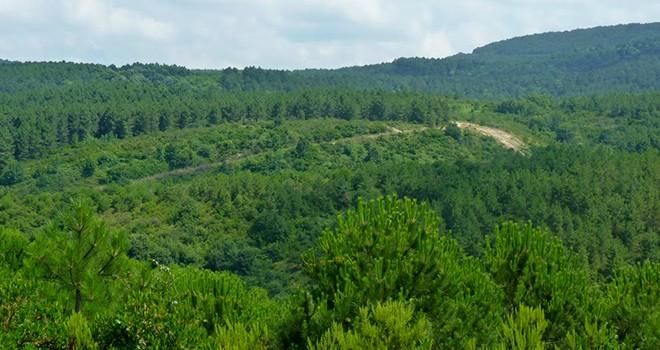 Betonlaşmanın önü açılıyor! Ormanlara imar kanunu